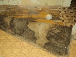 dry rot repair contractors