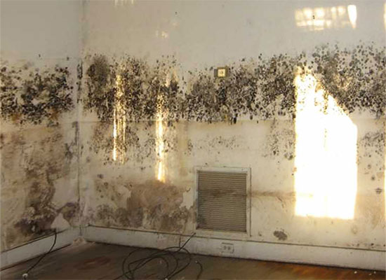 mold testing near me